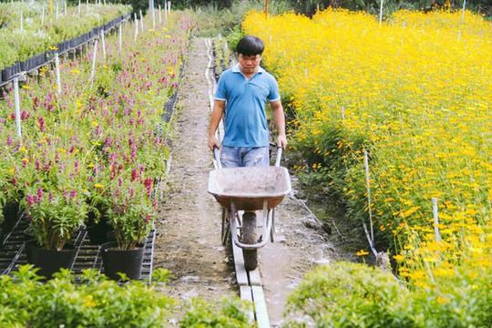 Không thể tin nổi giữa Sài Gòn có cánh đồng hoa đẹp đến thế! - Ảnh 3.
