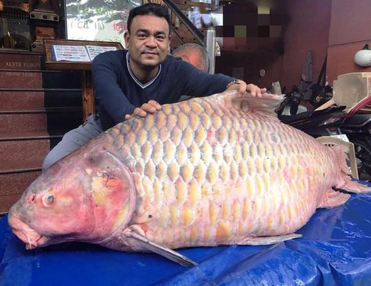 Đại gia săn cá hô từ Campuchia, Lào, Thái... - Ảnh 4.