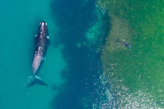 Chiêm ngưỡng 20 bức ảnh chụp từ trên không đẹp nhất năm 2017 - Ảnh 4.