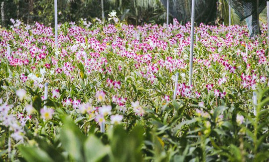 Không thể tin nổi giữa Sài Gòn có cánh đồng hoa đẹp đến thế! - Ảnh 5.