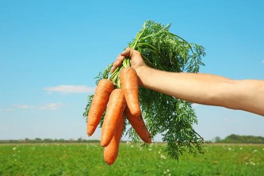 10 thực phẩm hằng ngày giúp cơ thể giải độc tự nhiên - Ảnh 2.