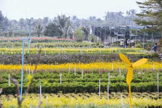 Không thể tin nổi giữa Sài Gòn có cánh đồng hoa đẹp đến thế! - Ảnh 7.
