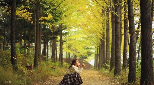 Mùa thu tại hòn đảo trong phim Bản tình ca mùa đông - Ảnh 7.
