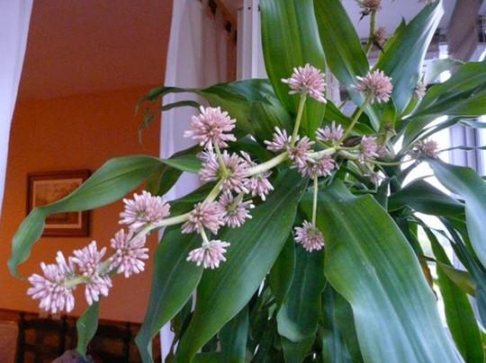 Chưng hoa gì vừa đẹp vừa tốt cho sức khỏe - Ảnh 8.