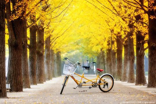 Mùa thu tại hòn đảo trong phim Bản tình ca mùa đông - Ảnh 8.