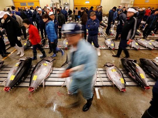 Chợ cá lớn nhất thế giới ở Nhật Bản - nơi bán những con cá triệu USD - Ảnh 9.