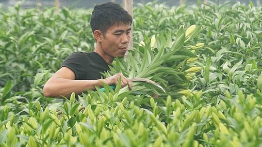 Hà Nội có thêm làng hoa Tây Tựu quy mô lớn - Ảnh 9.