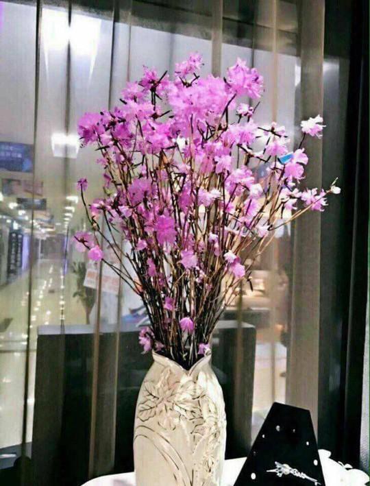 Hoa đỗ quyên ngủ đông cũng có độc tố - Ảnh 9.