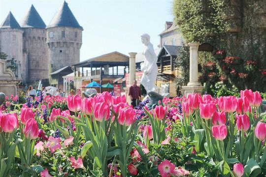 1 triệu bông tulip khoe sắc trên đỉnh Bà Nà - Ảnh 1.