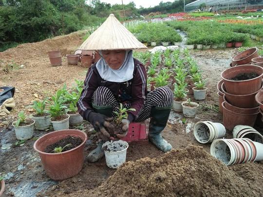 Chùm ảnh: Ngắm làng hoa Vân Dương vào mùa vụ Tết - Ảnh 8.