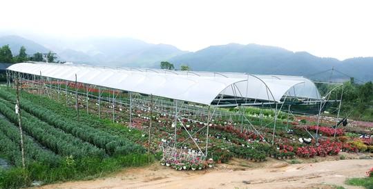 Chùm ảnh: Ngắm làng hoa Vân Dương vào mùa vụ Tết - Ảnh 4.