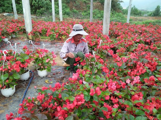 Chùm ảnh: Ngắm làng hoa Vân Dương vào mùa vụ Tết - Ảnh 6.