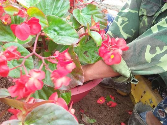 Chùm ảnh: Ngắm làng hoa Vân Dương vào mùa vụ Tết - Ảnh 1.