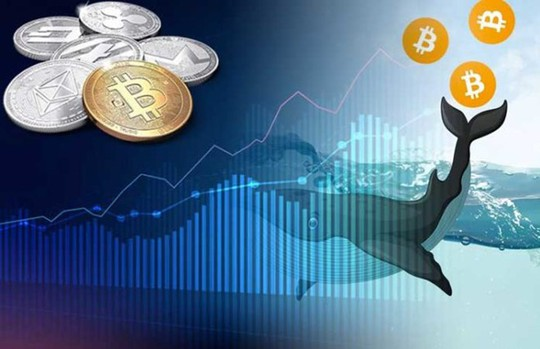 'Cá voi' thức giấc - thị trường Bitcoin sắp biến động lớn? - Ảnh 1.