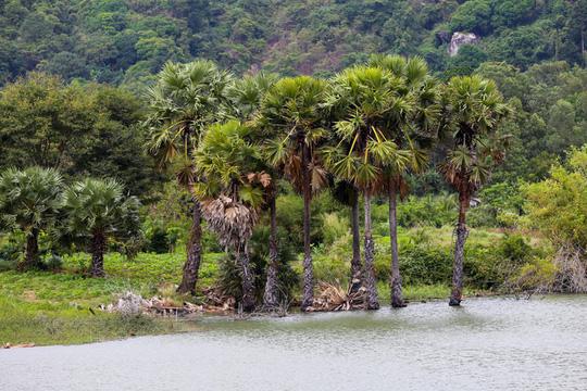 Hồ nước nổi tiếng với món gà đốt ở An Giang - Ảnh 3.