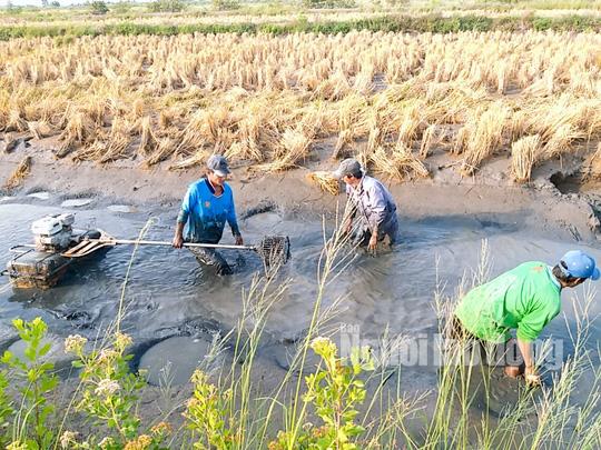 Cận Tết, về Cà Mau xem người dân quậy bùn bắt tôm càng xanh - Ảnh 1.