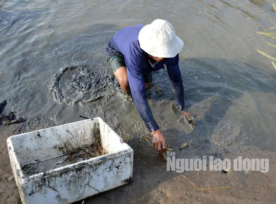 Cận Tết, về Cà Mau xem người dân quậy bùn bắt tôm càng xanh - Ảnh 2.