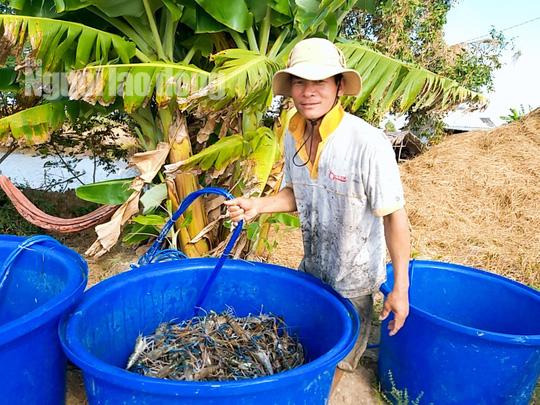Cận Tết, về Cà Mau xem người dân quậy bùn bắt tôm càng xanh - Ảnh 8.