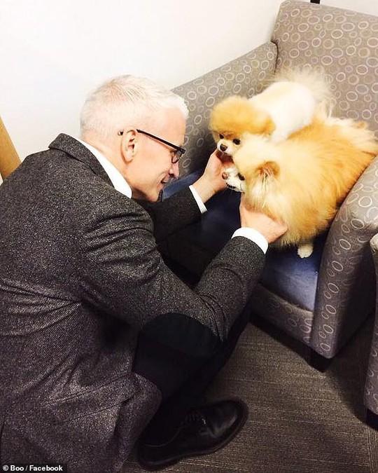 Chú chó Boo đáng yêu nhất thế giới qua đời - Ảnh 7.