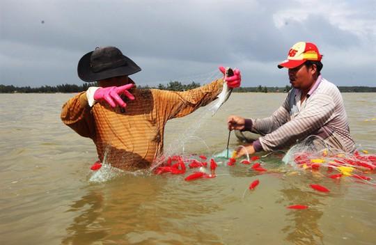 Từng đàn cá đối từ biển ngược vào cửa sông An Hòa - Ảnh 3.