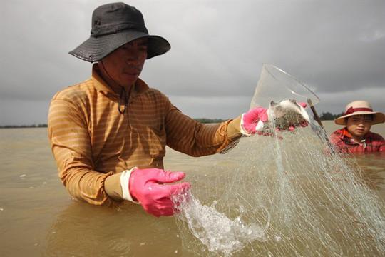 Từng đàn cá đối từ biển ngược vào cửa sông An Hòa - Ảnh 5.