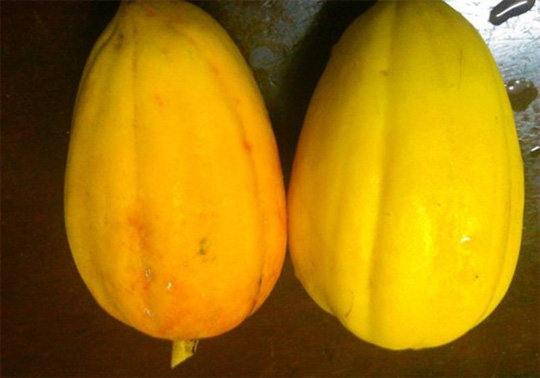 Phân biệt trái cây ngậm hóa chất tránh mua nhầm dịp Tết - Ảnh 10.