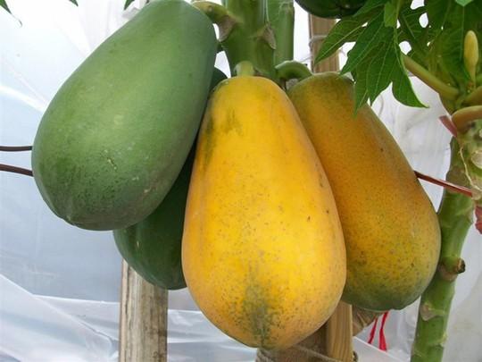 Phân biệt trái cây ngậm hóa chất tránh mua nhầm dịp Tết - Ảnh 9.
