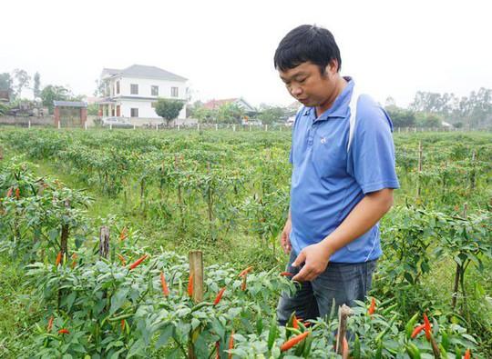 Trồng ớt trái vụ đón Tết, nông dân thu gần 1 triệu đồng mỗi ngày - Ảnh 3.