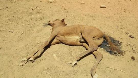 Úc: Hạn hán, ngựa chết la liệt trong vũng nước cạn khô - Ảnh 3.