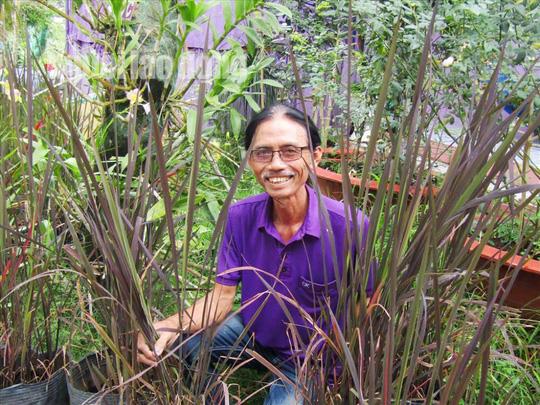 Lão nông 70 tuổi tiết lộ lí do trồng toàn hoa kiểng màu tím, thu hơn 15 tỉ/năm - Ảnh 18.
