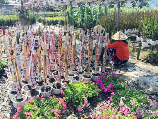 Lão nông 70 tuổi tiết lộ lí do trồng toàn hoa kiểng màu tím, thu hơn 15 tỉ/năm - Ảnh 4.