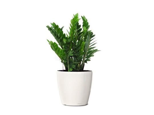 Cây trồng trong nhà mang lại tài lộc và sức khỏe năm mới - Ảnh 1.
