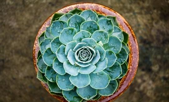 Cây trồng trong nhà mang lại tài lộc và sức khỏe năm mới - Ảnh 8.