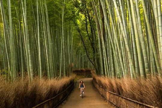 'Cảm giác lạ' thu hút hàng chục triệu khách đến rừng tre ở Nhật mỗi năm - Ảnh 1.