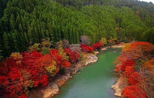 'Cảm giác lạ' thu hút hàng chục triệu khách đến rừng tre ở Nhật mỗi năm - Ảnh 2.