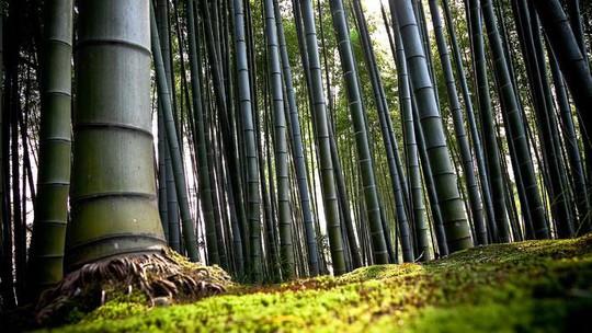 'Cảm giác lạ' thu hút hàng chục triệu khách đến rừng tre ở Nhật mỗi năm - Ảnh 3.