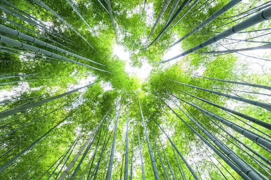 'Cảm giác lạ' thu hút hàng chục triệu khách đến rừng tre ở Nhật mỗi năm - Ảnh 4.