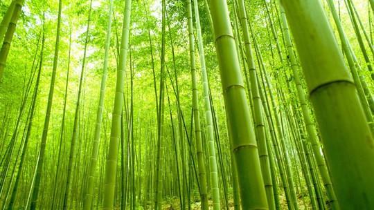 'Cảm giác lạ' thu hút hàng chục triệu khách đến rừng tre ở Nhật mỗi năm - Ảnh 5.