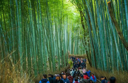 'Cảm giác lạ' thu hút hàng chục triệu khách đến rừng tre ở Nhật mỗi năm - Ảnh 7.