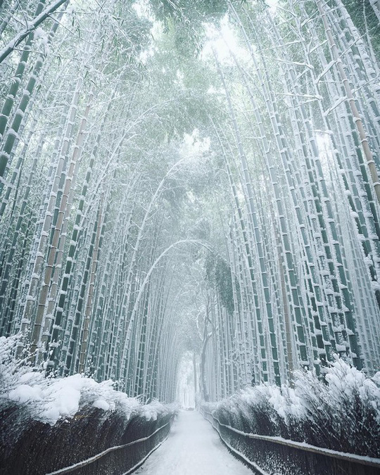 'Cảm giác lạ' thu hút hàng chục triệu khách đến rừng tre ở Nhật mỗi năm - Ảnh 8.