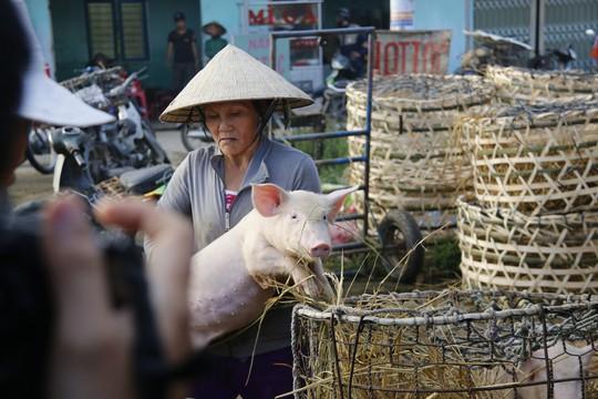Nghề độc ở chợ heo lớn nhất Quảng Nam - Ảnh 19.