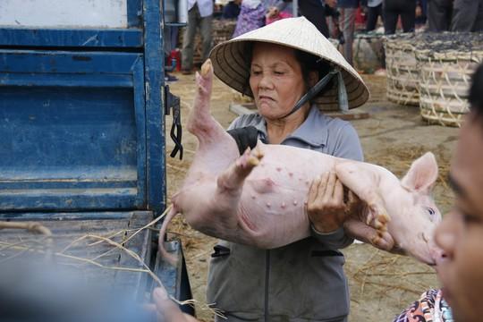 Nghề độc ở chợ heo lớn nhất Quảng Nam - Ảnh 17.