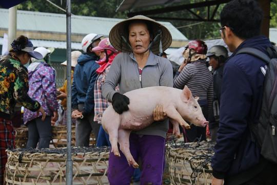 Nghề độc ở chợ heo lớn nhất Quảng Nam - Ảnh 2.