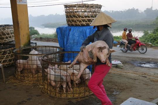 Nghề độc ở chợ heo lớn nhất Quảng Nam - Ảnh 30.