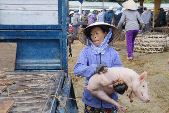 Nghề độc ở chợ heo lớn nhất Quảng Nam - Ảnh 34.