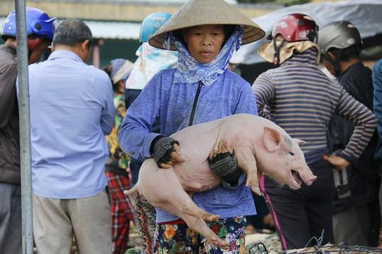 Nghề độc ở chợ heo lớn nhất Quảng Nam - Ảnh 33.
