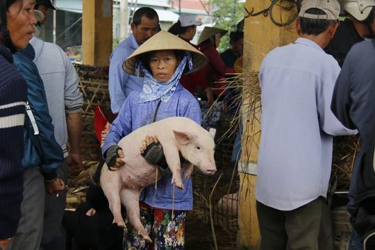 Nghề độc ở chợ heo lớn nhất Quảng Nam - Ảnh 32.