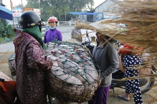 Nghề độc ở chợ heo lớn nhất Quảng Nam - Ảnh 10.