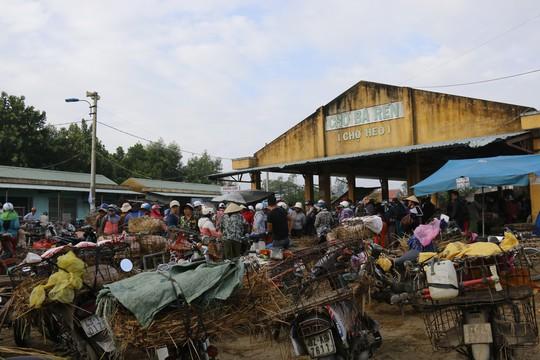 Nghề độc ở chợ heo lớn nhất Quảng Nam - Ảnh 1.