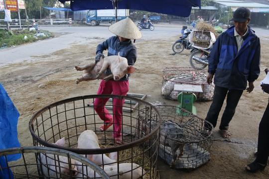 Nghề độc ở chợ heo lớn nhất Quảng Nam - Ảnh 23.